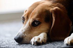 犬の具合が悪い,犬の病気