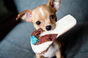 犬 しつけ,犬 1歳まで
