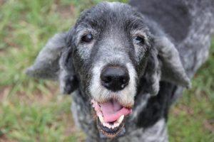 シニア犬,老犬の介護