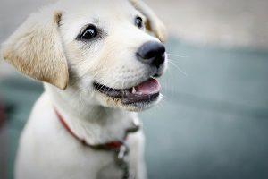 子犬 首輪 いつから,子犬 首輪 おすすめ,子犬 首輪 嫌がる