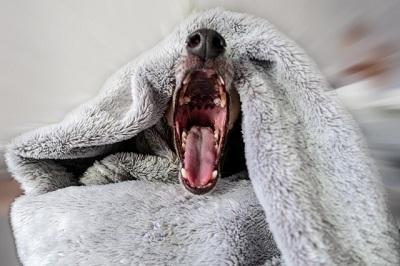 犬 歯石 茶色