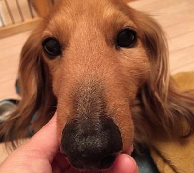 犬 歯石,犬 歯周病悪化